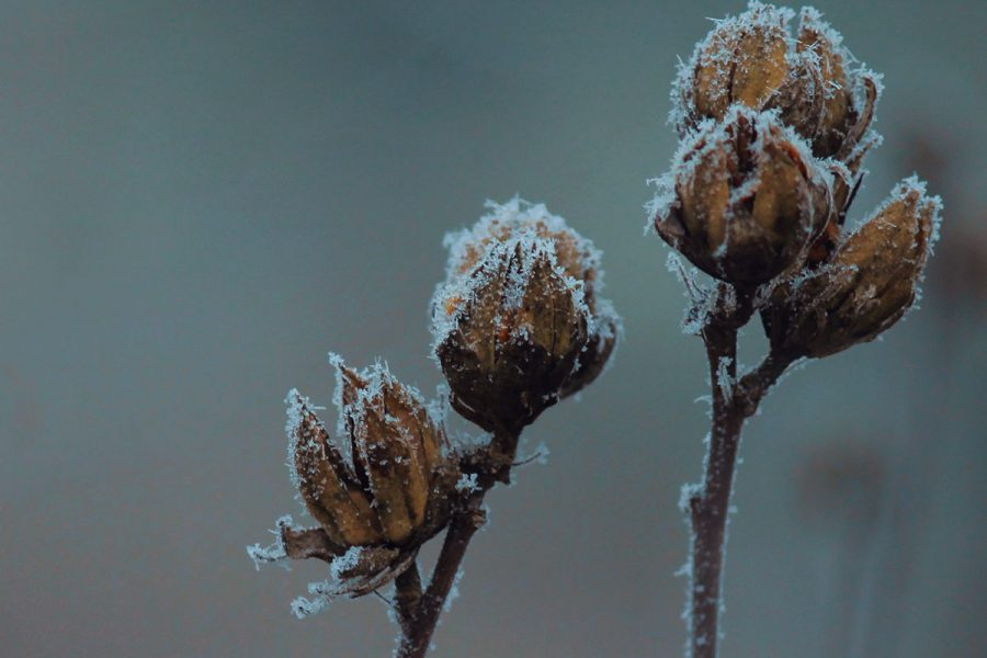 11 idee per i blog post in inverno